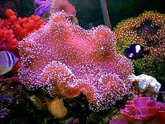 15 Easy Saltwater Aquarium Reef Corals
