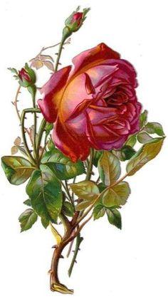 Glanzbilder - Victorian Die Cut - Victorian Scrap - Tube Victorienne - Glansbilleder - Plaatjes : Rose