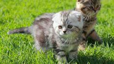 Nikon`s Formel für den Foto-Erfolg auf Facebook Nikon, Facebook, Kittens, Animals, Google, Photos, University, Kitty Cats, Animais
