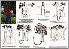 1. Los poderes curativos de los arboles Los Maestros taoístas advirtieron que los arboles son plantas sumamente poderosas. No solo absorbe... Chi Energy, Reiki Energy, Ayurveda, Chakras, Mudras, Forest Bathing, Chakra Meditation, Kundalini Yoga, Qigong