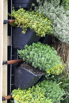 Vertical vegetable gardening / RHS Gardening
