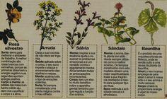 São muitas as ervas e plantas cujas suas propriedades têm o poder de purificar o corpo,a mente e o ambiente,de atrair a sorte,o amor, a saúd...