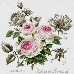 Etude a la rose (Ronsard)