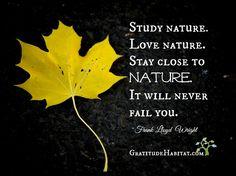 Stay close to nature. It will never fail you. Visit us at: www.GratitudeHabitat.com #Study-nature #Love-nature #Frank-Lloyd-Wright