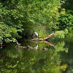 """lunchtime"" von Bernd Hoyen #fotografie #photography #fotokunst #photoart #digitalart #baum #bäume #tree #trees #grün #green #see #seen #sea #seas #spiegelung #spiegelungen #reflection #reflections #wasserspiegelung #wasserspiegelungen #fischreiher #heron #natur #nature #landschaft #landschaften #landscape #landscapes #deutschland #germany #berlin"