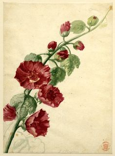 Flower study by Jan van Huysum  Gorgeous detailing, use of shadow and blending