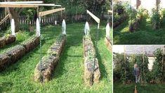 Tomato garden - How to Grow 10 Foot Tall Tomato Plants In Straw Bales – Tomato garden Growing Tomatoes, Growing Plants, Planting Plants, Agriculture, Strawbale Gardening, Landscape Design, Garden Design, Straw Bales, Tomato Plants