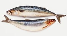 Eat herring and mackerel to support UK after Brexit, urges charity Charity, Salmon, Fish, Ocean, Pisces, The Ocean, Atlantic Salmon, Sea, Trout