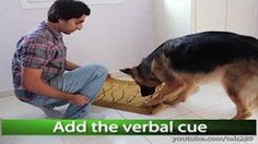 "how to teach your dog toClean Your Paws!"" - YouTube"