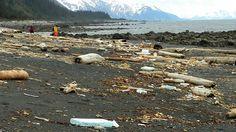 Les États-Unis s'attendent à recevoir les débris du tsunami japonais du 11 mars 2011 ! Certains ont déjà touché la côte ouest du continent américain, mais la majeure partie forme encore une masse menaçante entre Hawaï et la Californie. Les scientifiques craignent également que des coquillages et crabes asiatiques, transportés par ces déchets, viennent concurrencer la faune locale.