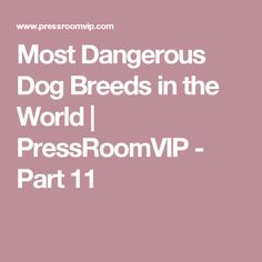 Most Dangerous Dog Breeds in the World | PressRoomVIP - Part 11