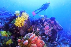 """Tubbataha Natural Reef in the island province of Palawan, Philippines. Declared a """"World Heritage Site"""" by the UNESCO, the reef is a haven among divers and marine biologists. Scuba Diving Classes, Palawan Island, Visit Philippines, Marine Ecosystem, Maui Vacation, Park Photos, Underwater Photography, Outdoor Fun, Snorkeling"""