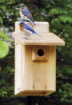 How to Build a Bluebird House  Nest Box Plans   Birds   Pinterest     How to Build a Bluebird House  Nest Box Plans   Birds   Pinterest   Bluebird  nest  Blue bird house and Bluebird house