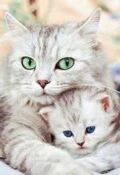 Mom cat and baby kitten    cats     kittens   #cats #cutecats     #SoCuteBabies