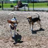 Woodcliff Lake moves to ban sale of pets from 'mills' | #northjerseybrk | #pets #dogs #cats #animals #laws #ordinances #puppymills #borough #newjersey