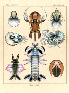 [OC Art] I illustrated the invertebrate fossil Pokemon as a scientific plate illustration based off of real life arthropods.