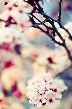 There's very little that makes me smile more in #spring than blossom