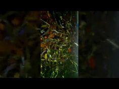 fish tank wallpaper hd #fish #tank #wallpaper #hd #Fish #FishTank #TropicalFish #Fishing #NomCat #Salmon #Aquarium #Health #Food #Healthy #Seafood #Heart #HealthyLiving #FishTank #HeartHealth #Recipe #FlyFishing #TropicalFish #HealthyEating#Trout #Goldfish #Cooking #Water #Goldfish #Water #Saltwater #Vancouver #Dubai #NomCat #MontereyBayAquarium #SeaLife #UAE #fish #aquarium #fishtank #swim #swimming #water #coral #reef #reeftank #tropical #koi #saltwater #freshwater #beautiful #ocean…