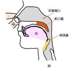 Frenzel フレンゼル・テクニック(Frenzel Technique)   下図がフレンゼル・テクニックをした時の人間の頭の断面図です。  舌は、ピストンの働きをします。上後方へ舌を押すことによって、全てのノドの空間は、 押しつぶされます。すると空気は何処かに行かなければならない。 空気は肺に行こうとするが喉頭蓋は閉じられている、空気は胃に行こうとするが食道は閉じている、空気は鼻を経由して外に出ようとするが鼻は指で閉じられている。 空気は耳管だけに行けます、耳管に押し込まれる空圧は舌の強さによって制限される。 舌は、信じられないほど強いです。 舌は、鼓膜を断裂するのに十分な気圧を提供することができます。 フレンゼル技術を実行します。