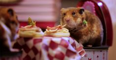 Watch two tiny hamsters go on an adorable Italian-themed date for Valentine's Day. If only they shared a single spaghetti noodle!