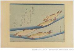 [魚づくし]. , 鮎 / 広重筆Ayu : [estampe] / Hiroshige-hitsu