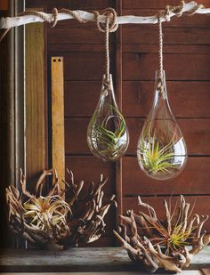 Mid Century Modern Air Hanging Planter with Tillandsia Air Plant