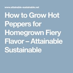 How to Grow Hot Peppers for Homegrown Fiery Flavor – Attainable Sustainable