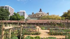 The Company's Garden, Downtown Cape Town, South Africa.