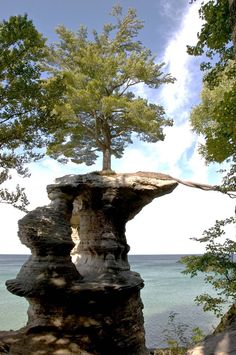 Look a little closer and you will see the answer – that rope on the right of the picture is not, in fact a rope. It is a system of roots, extending and stretching over the edge of the rock to the main bluff where there are nutrients and water aplenty. Pictured Rocks National Lakeshore.