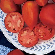"Amish Paste Grafted Tomato-  Dates back to the turn of the century, and is the best for sauces and canning. Deep red fruits, about 8 ounces, are large for canning types with ""real tomato"" flavor. Not overly acidic. Indeterminate."