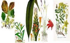 Tα πέντε ισχυρότερα αντιφλεγμονώδη βότανα! ένα βότανο που να εντοπίζει την φλεγμονή και ταυτόχρονα να καταπραΰνει τον πόνο, να μειώνει το πρήξιμο ταχείας δρ