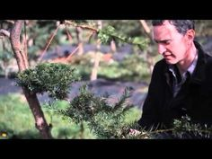 Jake Hobson talks about cloud pruning and niwaki while training a young Taxus baccata and demonstrating his favourite Japanese knot.