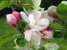'blossom' von ursfoto bei artflakes.com als Poster oder Kunstdruck $16.63