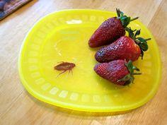 Easy Bug Prank You Can Make at Home - Morena's Corner