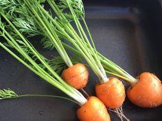 In der Schweiz wird diese kleine runde Karottensorte seit dem 1. Weltkrieg angebaut. Heute wird sie nur noch im St. Galler Rheintal ausgesät. Die Ernte dort beträgt 2'000 t Pariser Karotten und alle werden zu Konservengemüse verarbeitet. Es sind diejenigen Karotten, die wir oft zusammen mit Erbsen in der Büchse kaufen können. Jetzt weisst du bestimmt, welche Karotten ich anpflanzte. #edgarten #gartenblog #karotte Carrots, Vegetables, Food, Parisian, Harvest, Switzerland, Carrot, Vegetable Recipes, Eten
