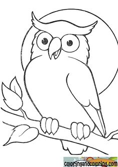 coloring pages - Gallery For > Owl Drawing For Kids Bird Drawings, Animal Drawings, Easy Drawings, Cartoon Drawings, Owl Patterns, Applique Patterns, Owl Coloring Pages, Coloring Books, Face Outline