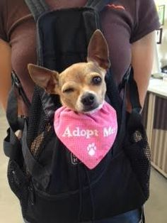 Forgotten Paws Animal Rescue helped Miss Pickles find her furever home in 2014! www.forgottenpaws.org #adoptabledog #fpar
