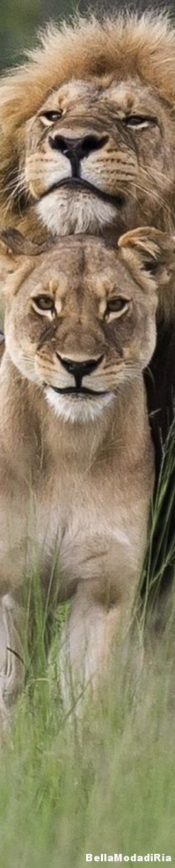 Safari in Zimbabwe, Africa