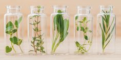 Essential oils are not all the same, each oil has its own unique fragrance, properties, benefits and individual characteristics. Eucalyptus Radiata, Ravintsara, Organised Housewife, Herbal Remedies, Herbalism, Glass Vase, Essential Oils, Fragrance, Essentials