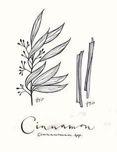 Cinnamon Print