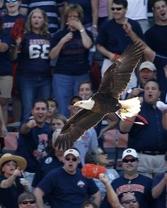 Go Spirit!  I Believe in Auburn and Love It  RollTideWarEagle.com great sports stories, audio podcast and FREE on line tutorial of college football rules. #CollegeFootball #Auburn #WarEagle