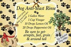Bath for dogs with yeast problem