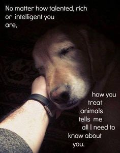Tiere in not, i love dogs I Love Dogs, Puppy Love, Cute Dogs, Animals And Pets, Cute Animals, Farm Animals, Animal Quotes, So True, Animals Beautiful