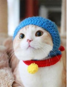 Gato de touca