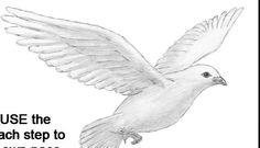 Bir Güvercin Nasıl Çizilir?