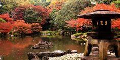 Momijigari: la magia dell'autunno nei boschi del Giappone (FOTO)
