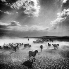 North east of Iran   Ph. by Ako Salemi