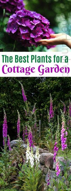 The Best Plants for a Cottage Garden : The Best Plants for a Cottage Garden, Cottage Garden, Cottage Garden Ideas, Gardening, Flowers for Cottage Garden Garden Types, Flower Garden Design, Flowers Garden, Flower Gardening, Country Cottage Garden, Cottage Garden Plants, Cottage House, Meadow Garden, Herbs Garden