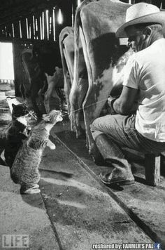 Cats and cows.