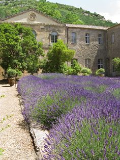 Fontfroide Abbey or l'Abbaye Sainte-Marie de Fontfroide is a former Cistercian monastery in France, situated 15 kilometers south-west of Narbonne near to the Spanish border. | Fontfroide Lavender | Copyright Cooke Photographics All Rights Reserved No Use without Permission
